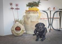 hund-hof-urlaub-suedtirol