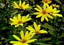Die Blumen blühen im Sommer um die Wette