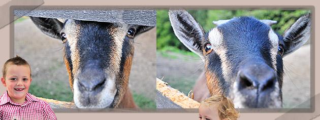 Tiere der Ferienwohnung Voellan Gruberhof